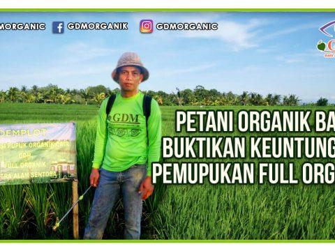 Petani Organik Bali Buktikan Keuntungan Pemupukan